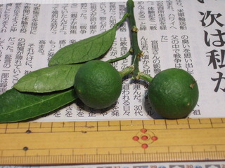greenball (2).JPG