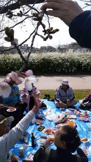 H31年白鷺花見2.jpg